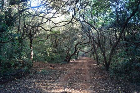 A trail close to the polo ground in Mahabaleshwar