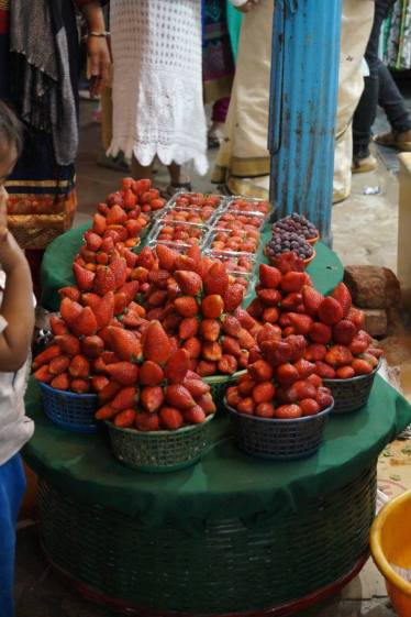 Mahabaleshwar and Strawberries
