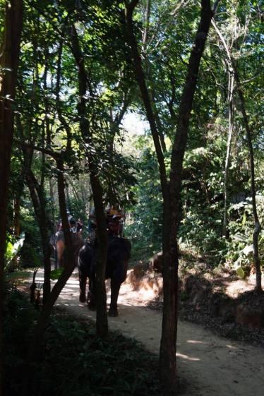 Phuket Elephant Safari