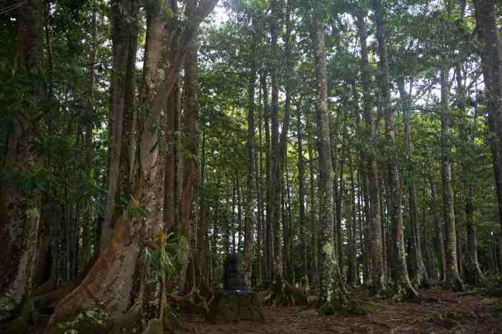 Rudraksha Forest Kauai