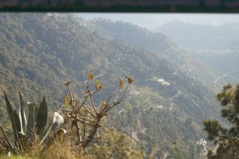 Looking into a valley in Kasauli