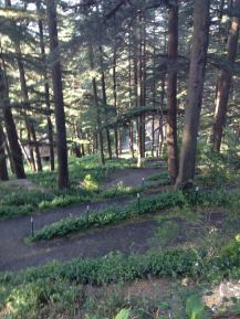 Walking trail in Chail