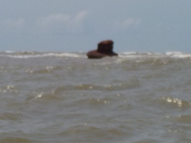 Godavari meets Bay of Bengal