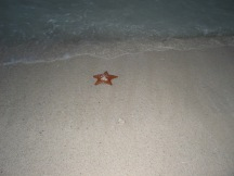 Starfish left behind