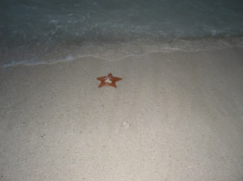Starfish left behind