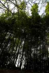 A mini bamboo forest Korakuen Garden