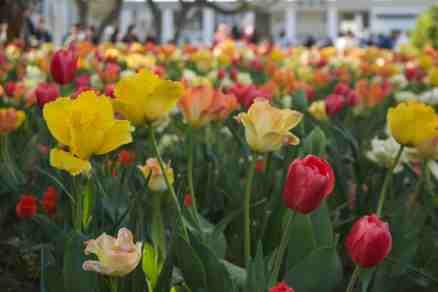 Japan in Spring - Yokohama Park