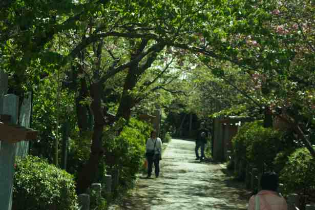 Kamakura Walkway