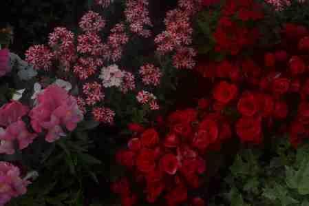 Yokohama Flowers