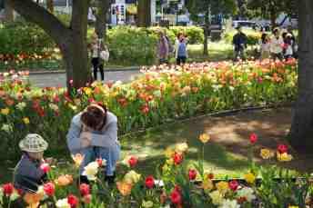 Yokohama Tulip Madness