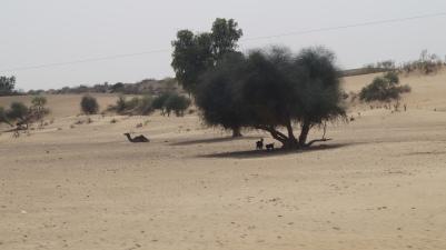 Animals chilling near Tanot
