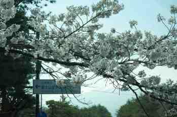 Mt Fuji - Blossom time