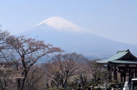 Mt Fuji View