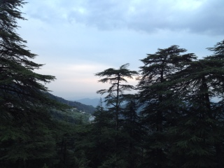 Sweeping views in Chail