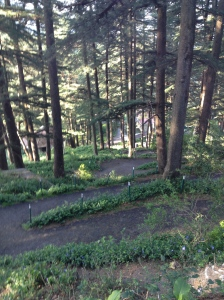 Walking trail in Chail Palace