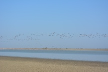 Birds Flying over Lake in Sanctuary