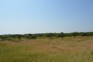 Gir Landscape