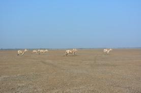 Running Donkeys Again