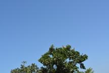 Vulture in tree in Gir