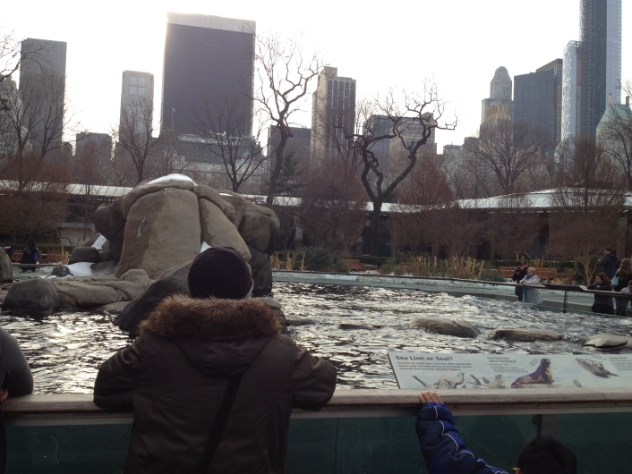 Watching in Central Park Zoo