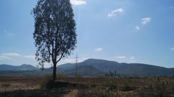 Fields in Araku