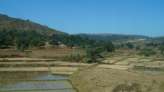 Fields in Shimliguda on the way to Araku