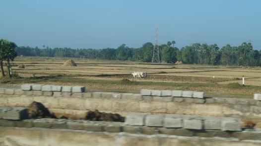 Fields on the way to Araku