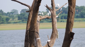 Birds chilling in the Kabini Backwaters at Kabini River Lodge