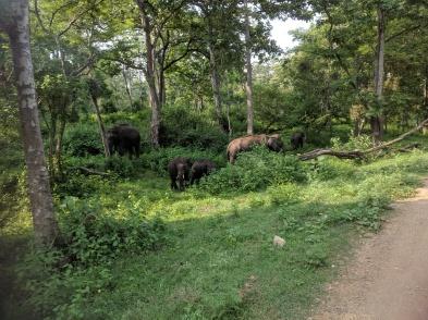 Elephant Family Zone B Nagarahole Kabini