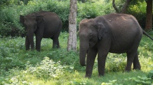 Elephants chilling by the side of the road at Nagarahole Tiger Reserve