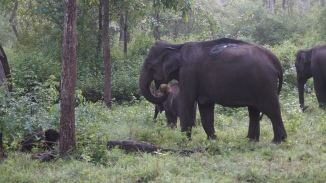 Morning Breakfast Zone A Nagarahole Kabini