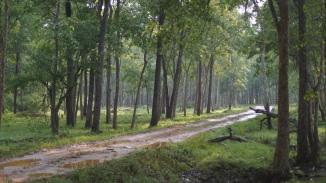 Nagarahole Forest Zone A Kabini