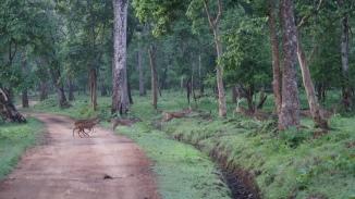 Prancing Deer Zone A Nagarahole Tiger Reserve Kabini