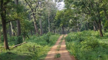 Road inside the jungle at Nagarahole in Zone B