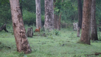 The deer predator at Zone A in Nagarahole Kabini