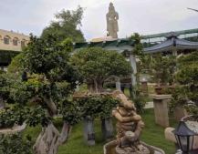 Ganesh midst gorgeous Bonsai