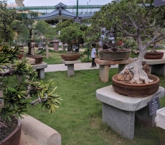 It is easy to get lost amongst the Bonsai :)